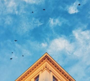Pássaros a voar